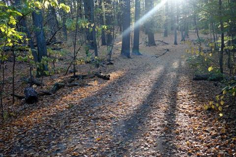 leaf strewn woodland path with sun rays coming down
