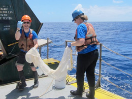 Exploring the Microbiome of an Ocean Bacteria