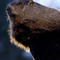 Let's talk real weather prediction on Groundhog Day