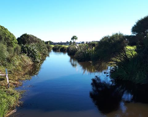 Wairakei Stream