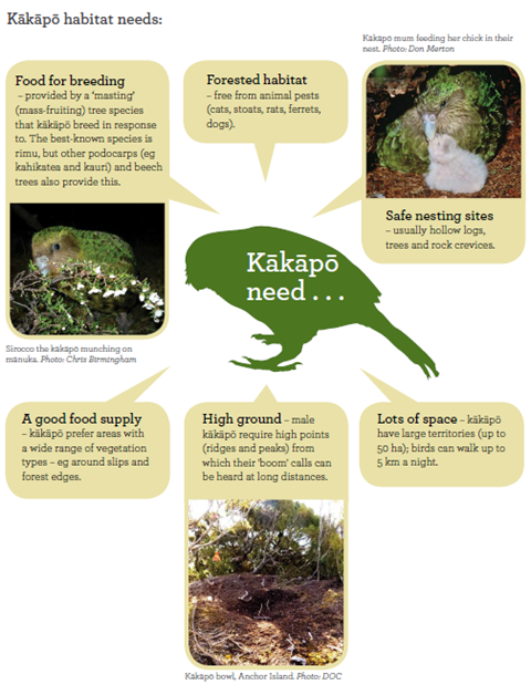 Kākāpō Need Activity