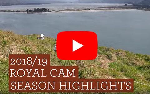 Video of Royal Cam season highlights.