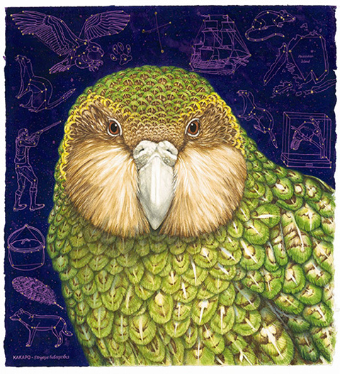 Kakapo artwork by Jo Ogier, Tamatea exhibition