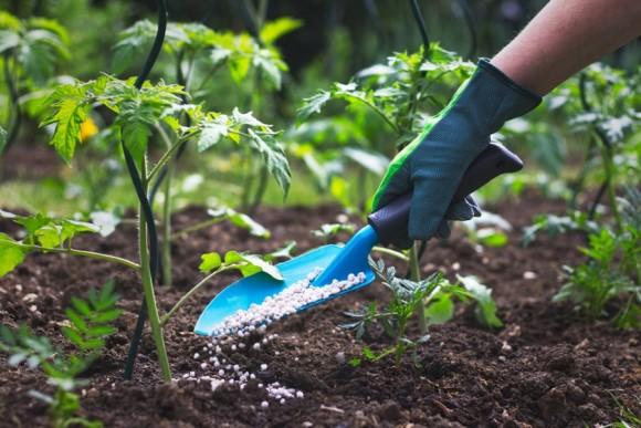 Trowel applying fertilizer