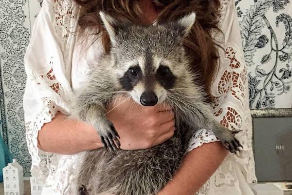 https://www.snapmunk.com/pumpkin-the-raccoon-instagram/