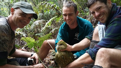 Meridian Energy staff and ranger Tim with kākāpō  on Whenua Hou