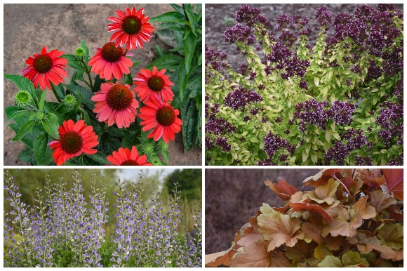 coneflower, ornamental oregano, heuchera, baptisia