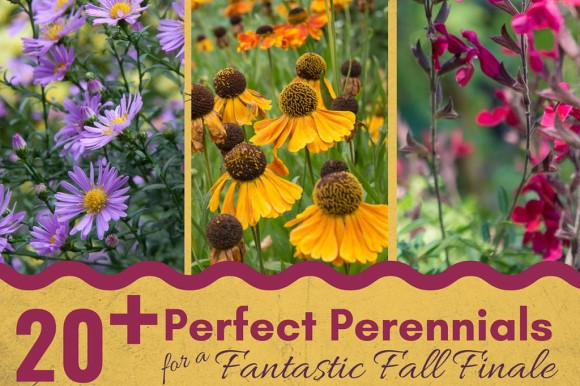 eGardenGo - 20+ Perfect Perennials for a Fantastic Fall Finale