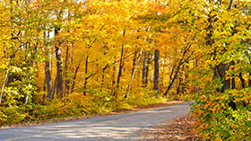 Picture of: Eastern Georgian Bay Forest