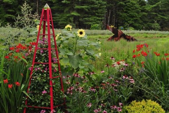 Red tuteur in garden