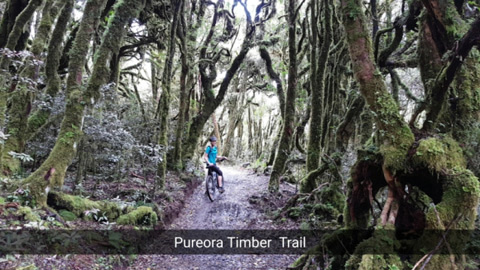Pureora Timber Trail