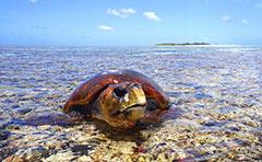Turtle on island