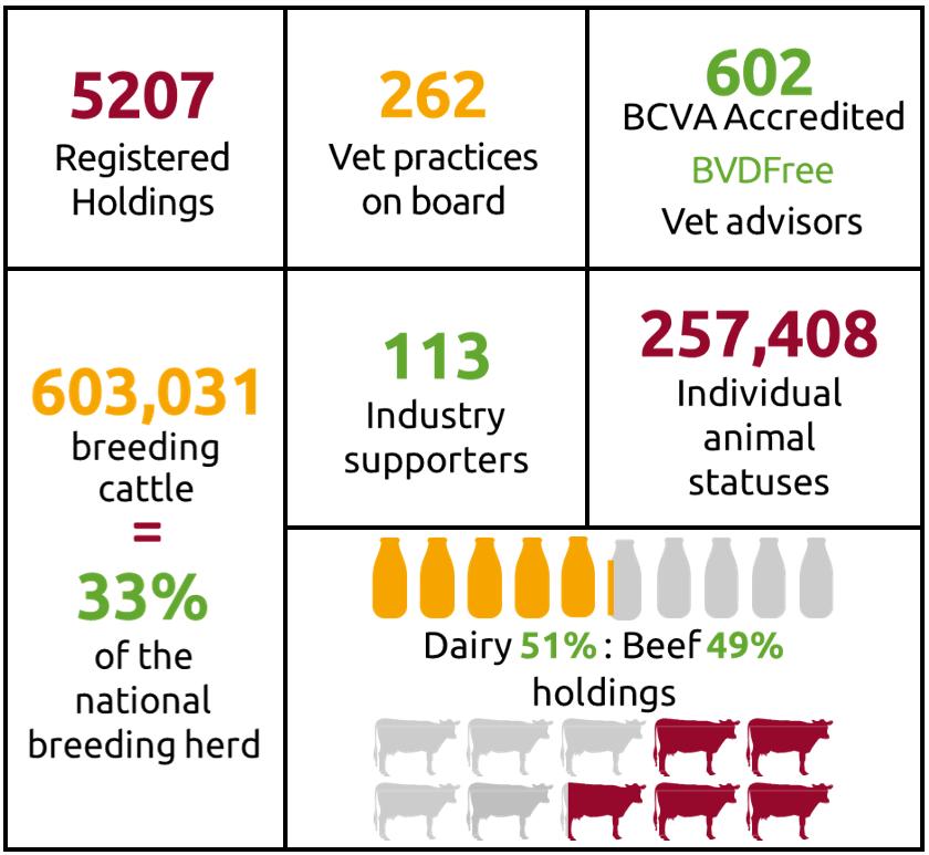 5207 Registered holdings, 262 Vet practices, 602 BCVA accredited vets, 33% of the national breeding herd.