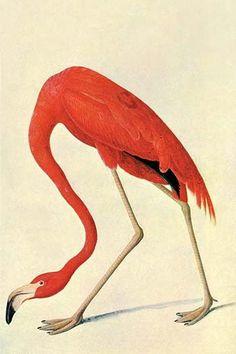 Flaming Flamingos!!!