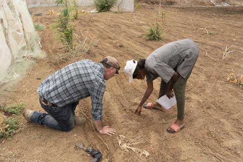 Inspection des arachides