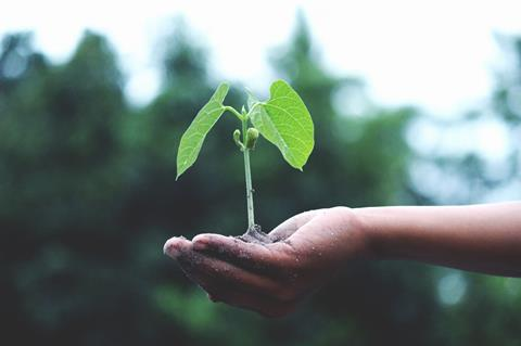 child's hand holding a seedling
