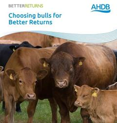 Choosing Bulls For Better Returns