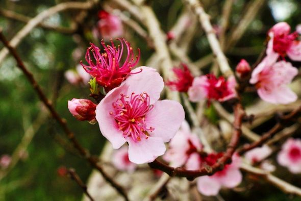 Spring in the centre's garden