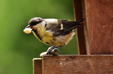 Arrington Garden Centre & Cafe Bird Feed October 2017