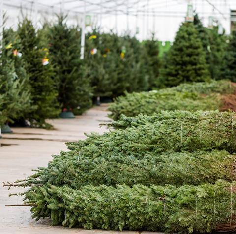 Arrington Garden Centre & Cafe Christmas Trees
