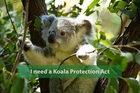 Koalas now 'functionally extinct'