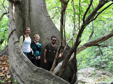 Lisa Britton and Colleen Ryan with a NCI staff member in a ceiba tree in Cazaderos Reserve. © Lisa Britton.