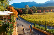 Boyton's Feathertop Winery