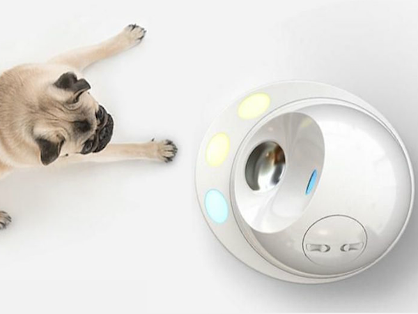 CLEVERPET HELPS DOGS GET SMARTER AND WAY LESS BORED