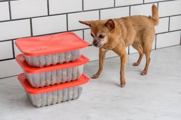 HUMAN-GRADE CUSTOM DOG FOOD STARTUP OLLIE RAISES $4.4M