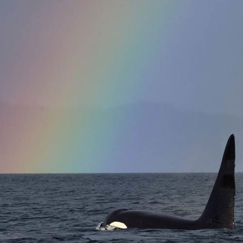 Fife with a rainbow