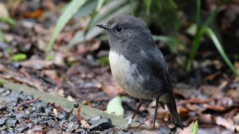 Don Cameron on public access protecting native birds